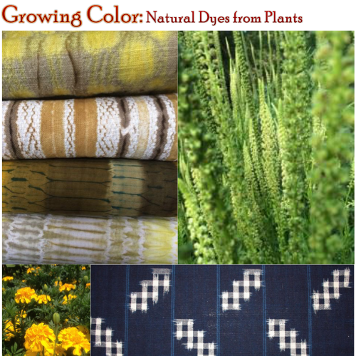 Growing Color Natural Dyes from Plants